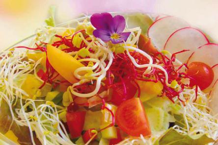 Elfengartensalat mit Sprossen und Blüten