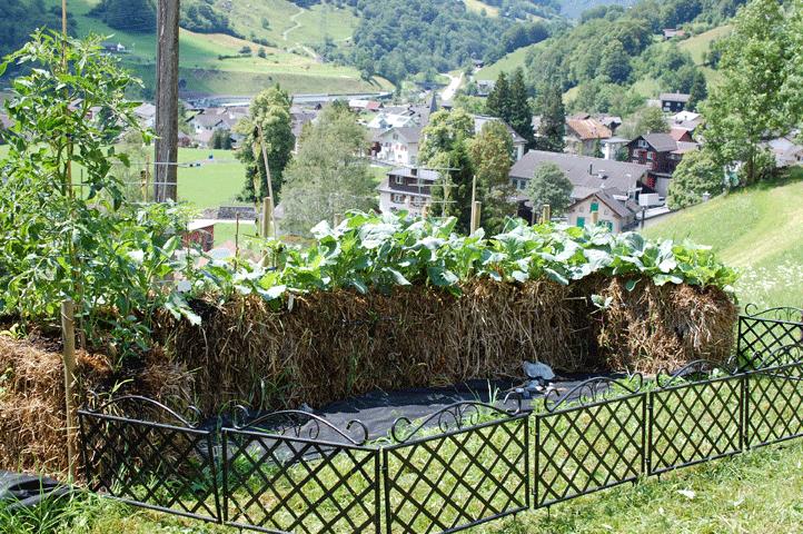 Trendthema »Gärtnern auf Strohballen«