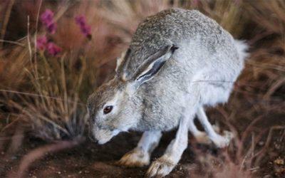Hasen und Kaninchen
