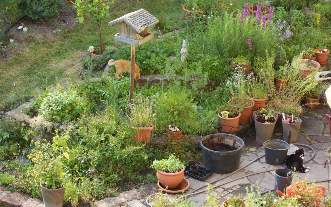 Zeit für den Kräutergarten