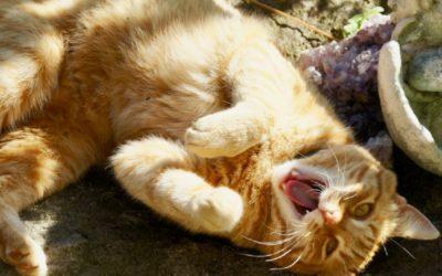 Katzen Yoga Teil 1