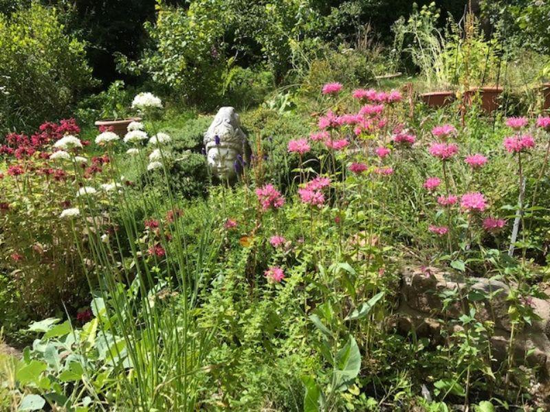 Gartenblog: GOLDMELISSEN – MONARDA